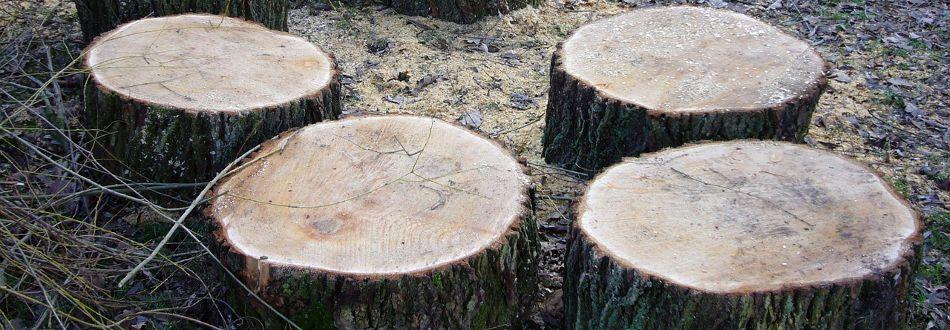 木目で様々な雰囲気を演出